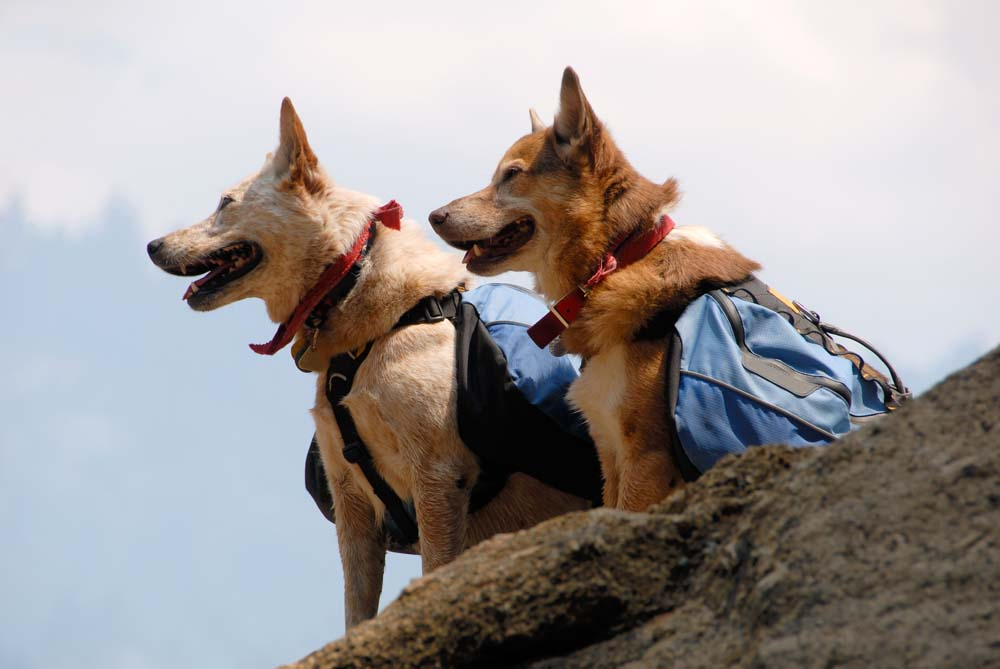Traveling With Your Pets – Pet Travel Tips with Island Trader Vacations