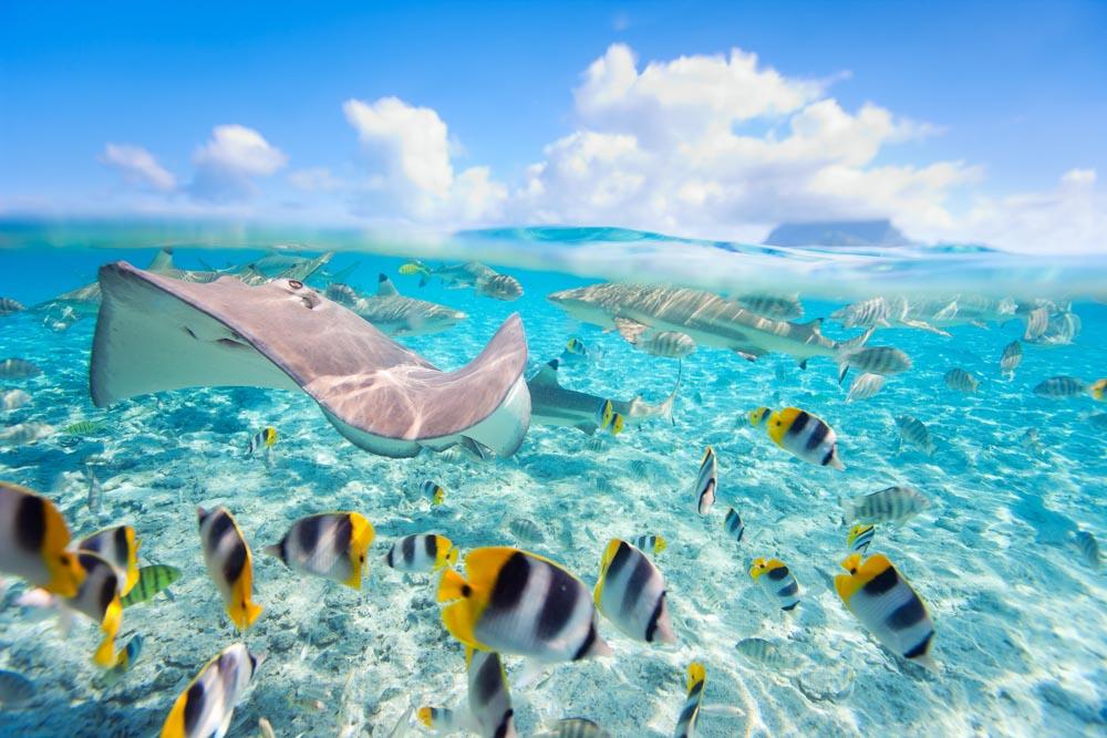 Sunshine Coast Vacations – An Island Trader Vacations Review