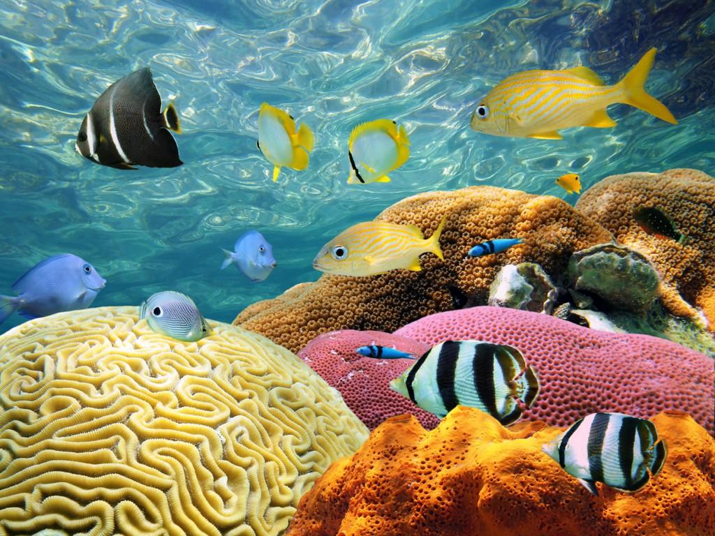 Island Trader Vacations Reviews Bimini